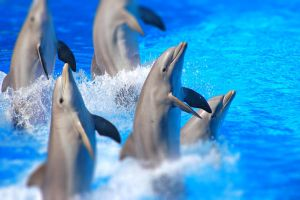 Dolphins by S1ghtly