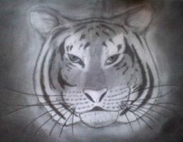 charcoal tiger head by DavidMunroeArt