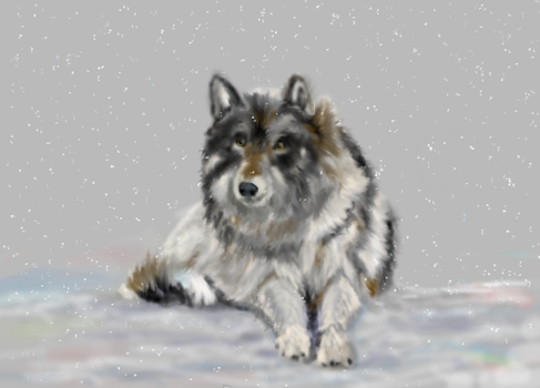 Wolf in the Snow by MacAodhagain