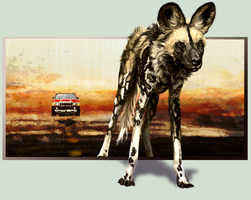 African Wild Dog Contest by SuzanneMoseley