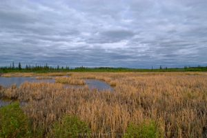 Northern Prairie Landscapes by drewhoshkiw