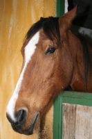 the horse named Kezban by snaplilly