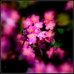 Forget me not No.1 by anchiix