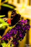 Fly, little butterfly! by aquanis-photos