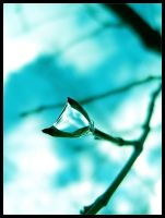 Winter Dew by The-Definition
