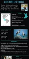 Interesting Facts About Blue Footed Boobies by rossmickel