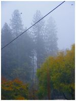 Fog and Crows by SLJones-photo
