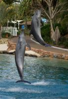 STOCK - Seaworld 2013-11 by fillyrox