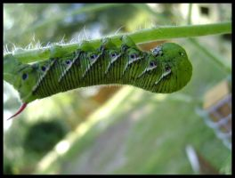 Green Worm by Sylviaizzle