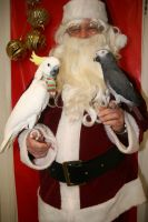 Santa with Birds 3 by Shiskababe