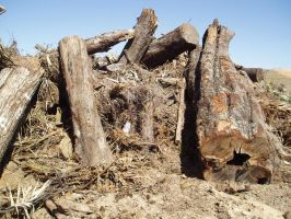 Log Pile by nitch-stock