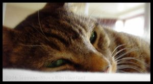 Norbert_2 by Jenuary-Stock