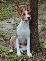 Basenji Houston 40 by 0Encrypted0