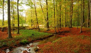 A little creek in the autumnal forest by jchanders