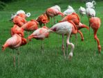 flamingos cologne 3 by ingeline-art