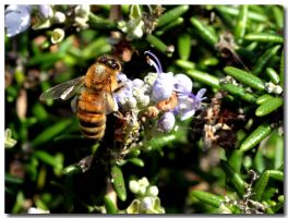 Busy Bee 2 by fl8us