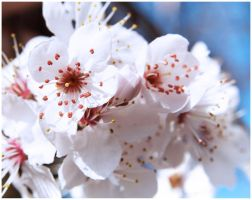 Blossom by Art-ography