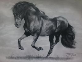 Horse drawing by urosh1991