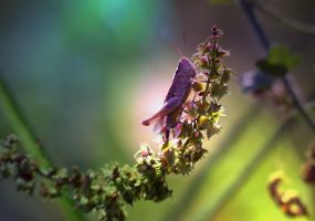 Little Locust by Edwige-Lch