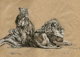 lions by Animal75Artist