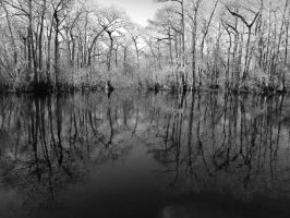 The Swamp in BandW by PaddleGallery