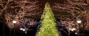 Facebook Cover | Christmas Tree -N- Lights by DanaHaynes