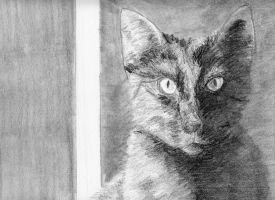 Cat stare by redcat1887