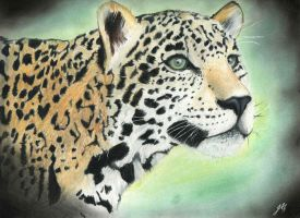 A Jaguar's Curiosity by Jessica500