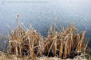 Lake and Grass by inessentialstuff