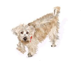 Pixel my Wheaten terrier by sedivyk