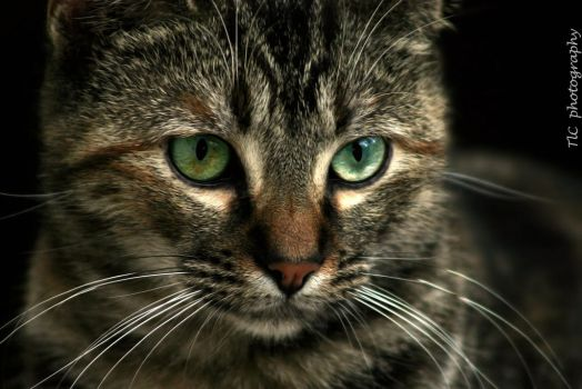 Kitty eyes by TlCphotography730