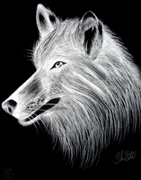 White Wolf by Miss-HyperShadow