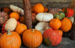 Piles of Pumpkins by StephGabler
