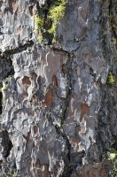 Cracked Oak Bark by BlindScientist