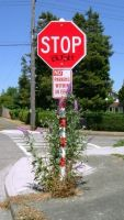 stop bush by rapidograph