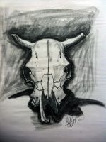Steer Skull by Barbossamonkey