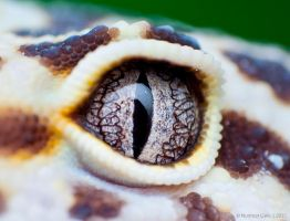 Extreme Eye Shot by basticelis