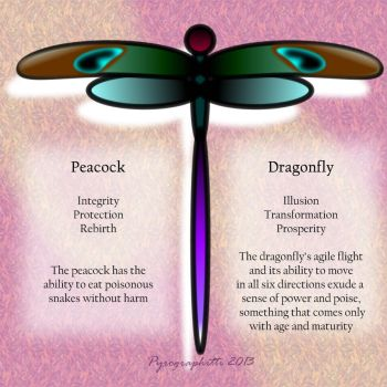 Peacock Dragonfly Info Card by GuardienOfThePyre