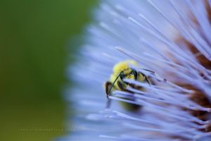 Ninja Bee by TruemarkPhotography