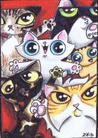 Funny cats ACEO  for lutamesta by KingZoidLord