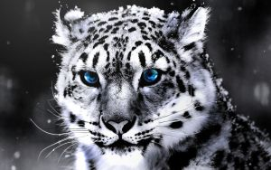 SnowLeopard- TrainingRetouch 1 by wizardino