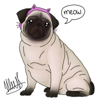 The Pug Said 'Meow'. by run-jump-fly