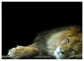 sleeping lion by Tobi-16