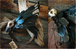 Magpie Headpiece by Nymla
