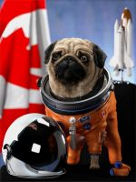 Canadian Space Pug by Psybearia