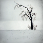 Winter's Advice by intao