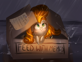 Feed with memes by Segraece