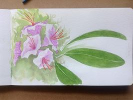 Rhododendron by R3nigade