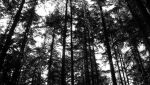 Old Trees II by StadiumLove