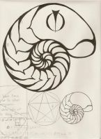 golden ratio by TheBeatDandy